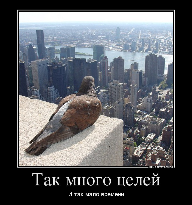 27585168_tak-mnogo-tselej