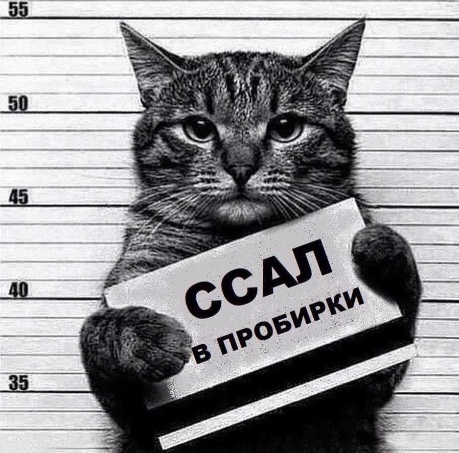 ssal_v_probirki