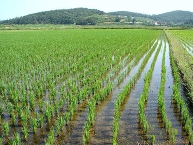 Какие растения выращивают на полях краснодарского края?