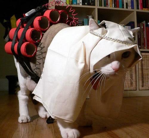 catter.jpg