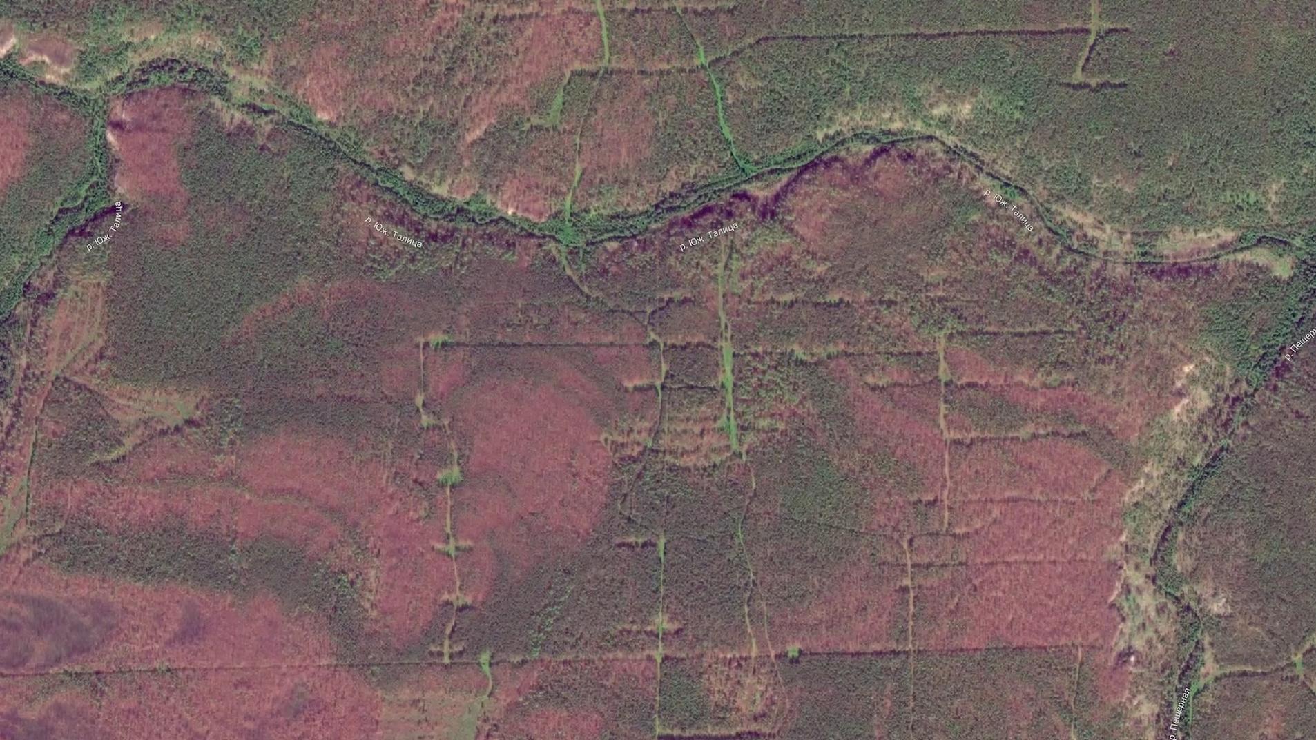 Лес сохнет на Урале вдоль рек во многих местах - даже недоступных человеку.