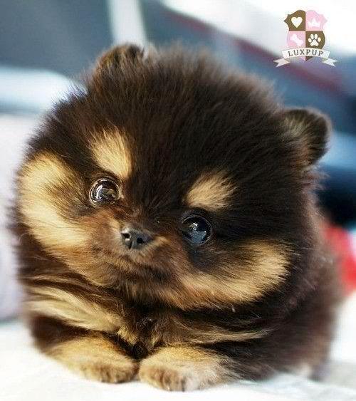 Puppy eyes attack!!