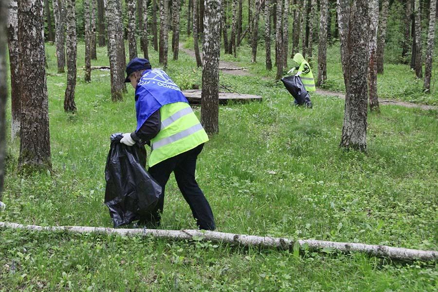 Уборка леса_04
