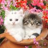 63281-Animal_Collection_Vol_39_No_3