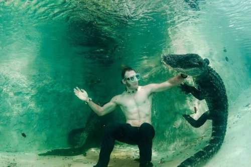 1403770403_plavanie-s-alligatorom