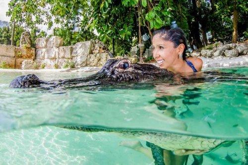 1403770472_plavanie-s-alligatorom-1