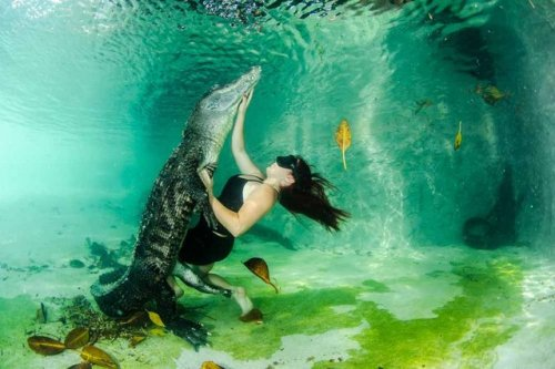 1403770469_plavanie-s-alligatorom-2