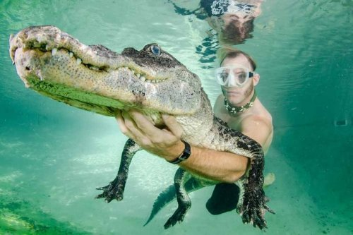 1403770484_plavanie-s-alligatorom-3