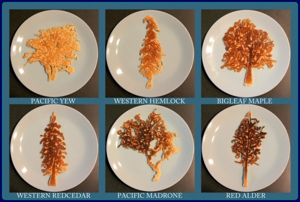 палачинки_дървета