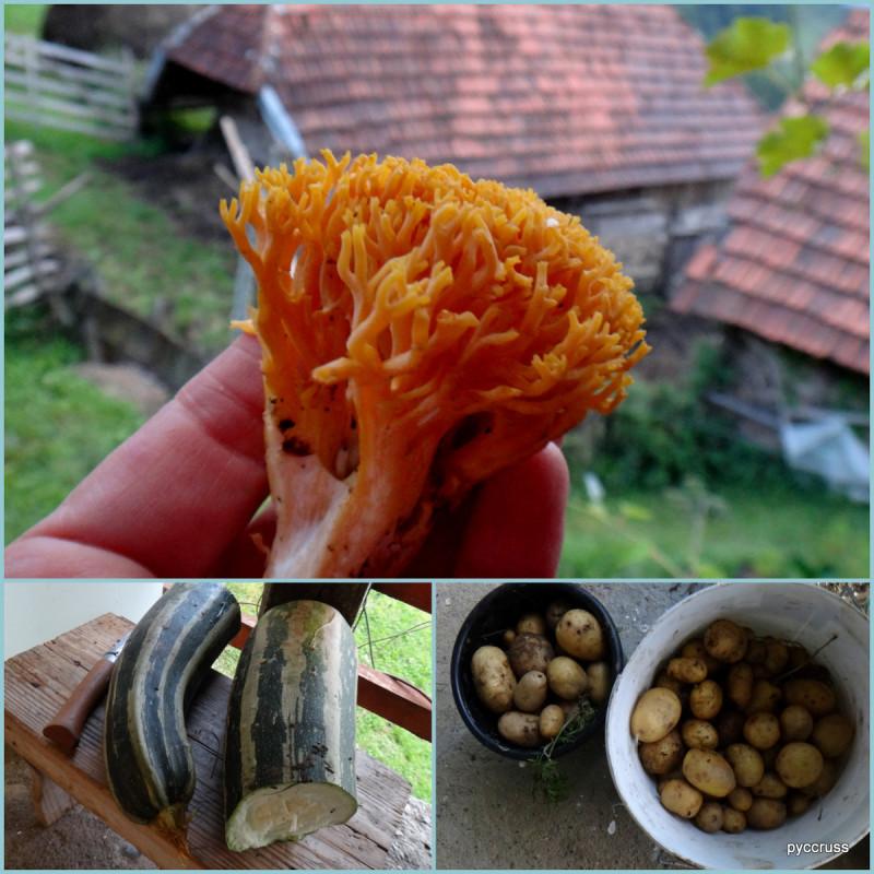 Monte2_Bosnia29