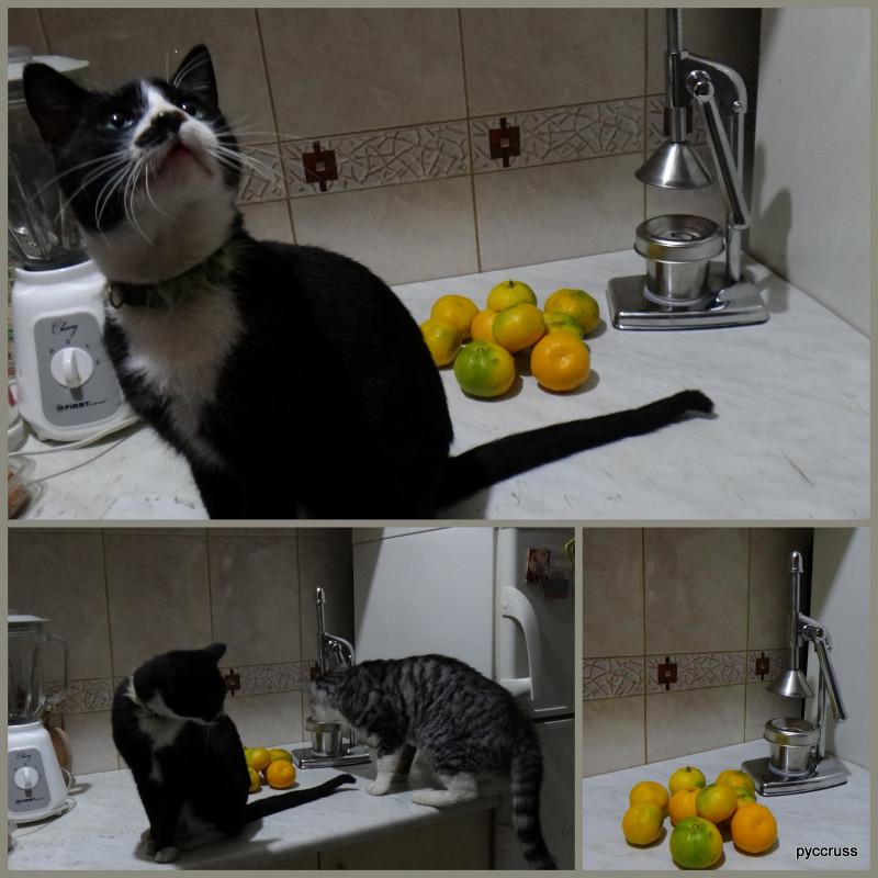 мандариновое