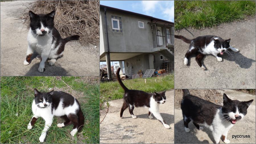мартовское кото+