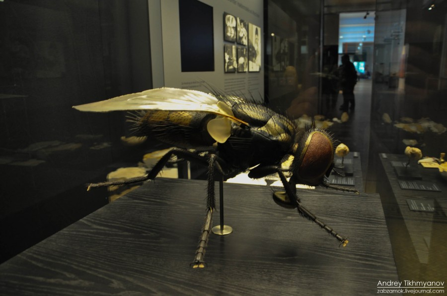 Insecta-7
