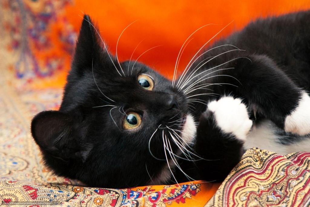 счастью черная кошка с котенком картинки снегоходы техника