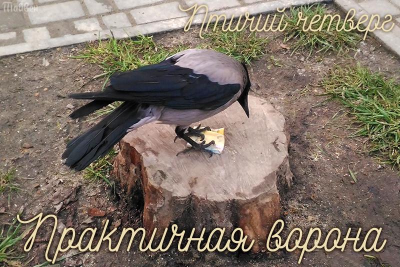 vorona_oblojka.jpg