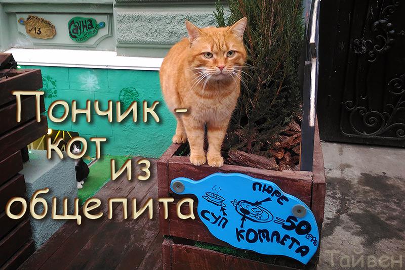ponchik_obshepit_oblojka.jpg