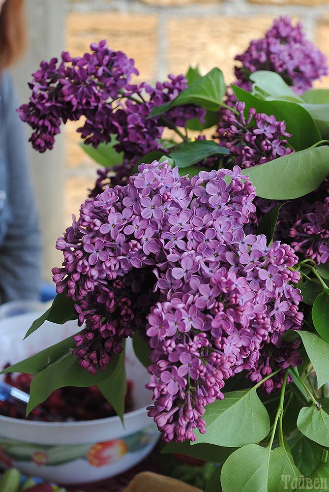 flowers31.jpg