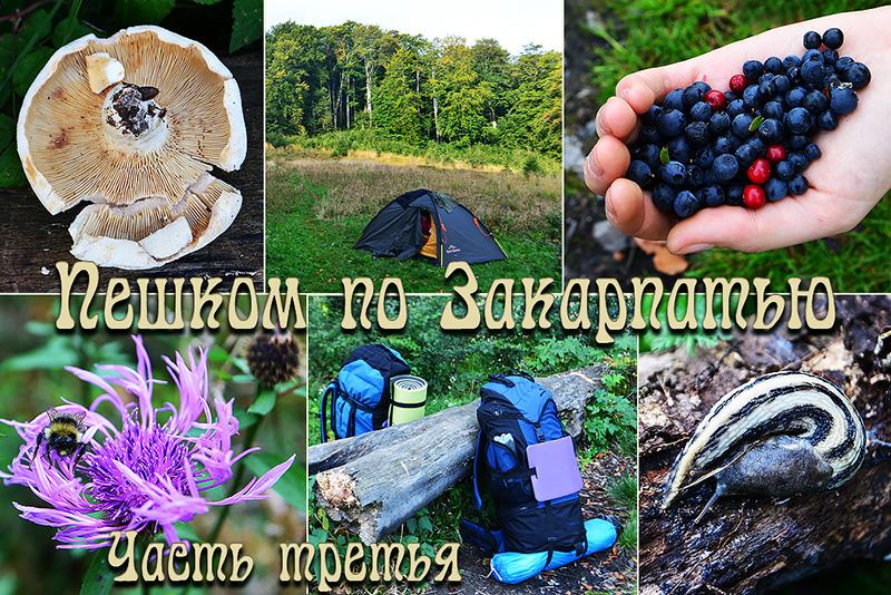zakarpatie_osen_oblojka3.jpg