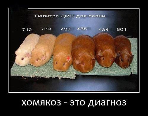 http://ic.pics.livejournal.com/zamolia/14297427/117638/117638_original.jpg