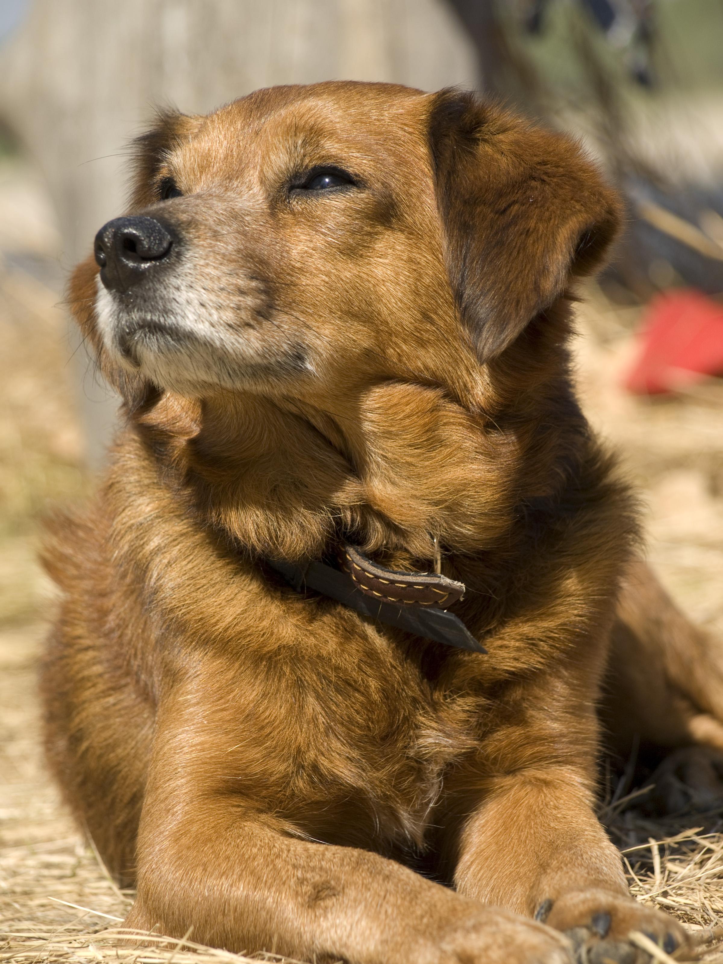 Член пса в ее попе 9 фотография