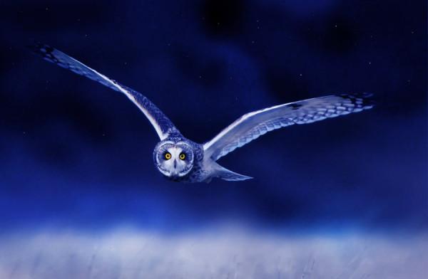 серебряная сова