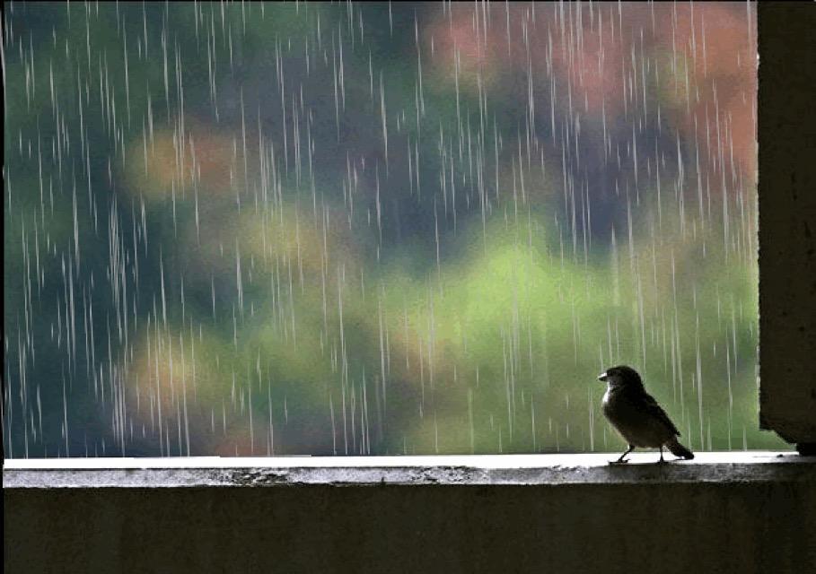 День, дождь за окном картинки анимация