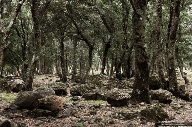 Сказочный лес..