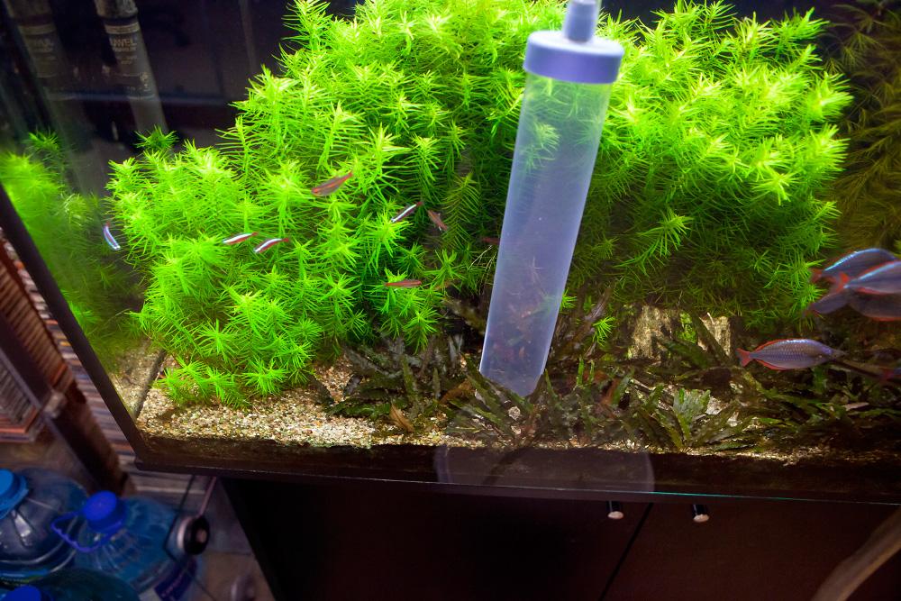 Уход за аквариумом на 200 литров