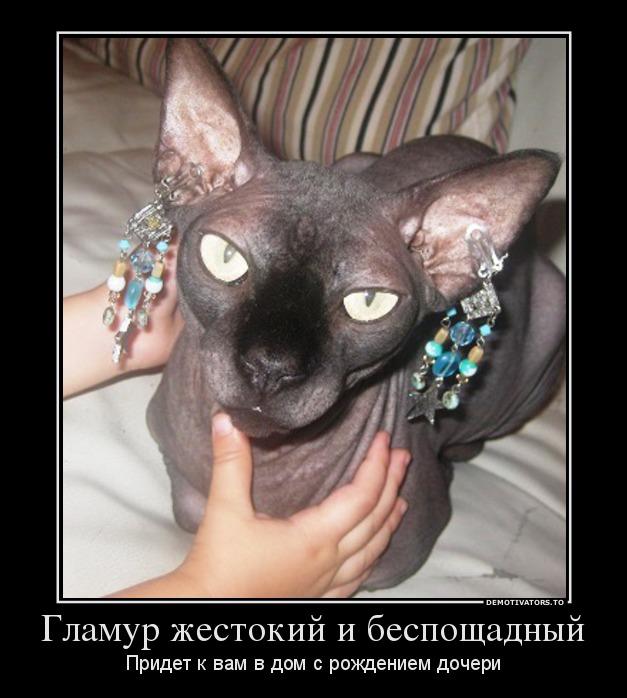 8877_glamur-zhestokij-i-besposchadnyij_demotivators_to