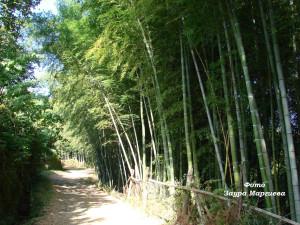 28. Бамбук у дороги
