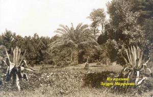 46. Ботанический сад
