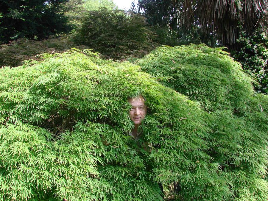 81. Местный абориген в листьях клена. Взгляд снаружи.