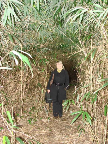 93 Туннель из зарослей бамбука
