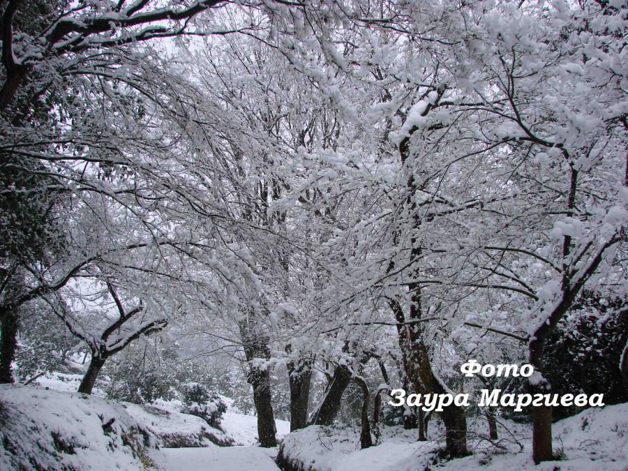 100. Батуми. Снег в субтропиках. 31. 12. 08 г.