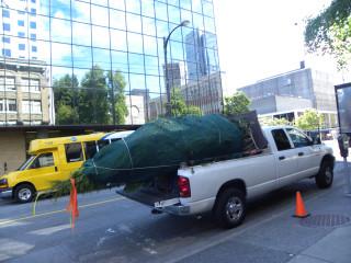 Tree/Foliage Truck