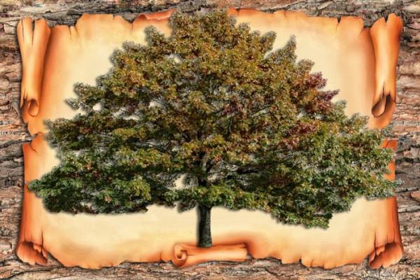 1246622465_family_tree_psd