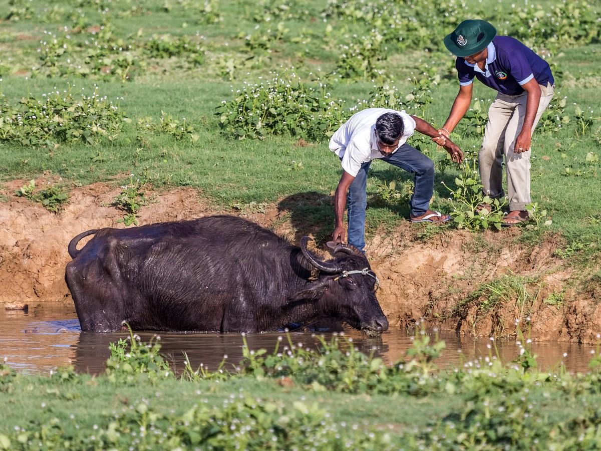 Шри-Ланка. Часть 2. Маяк Дондра и сафари Удавалаве. фото