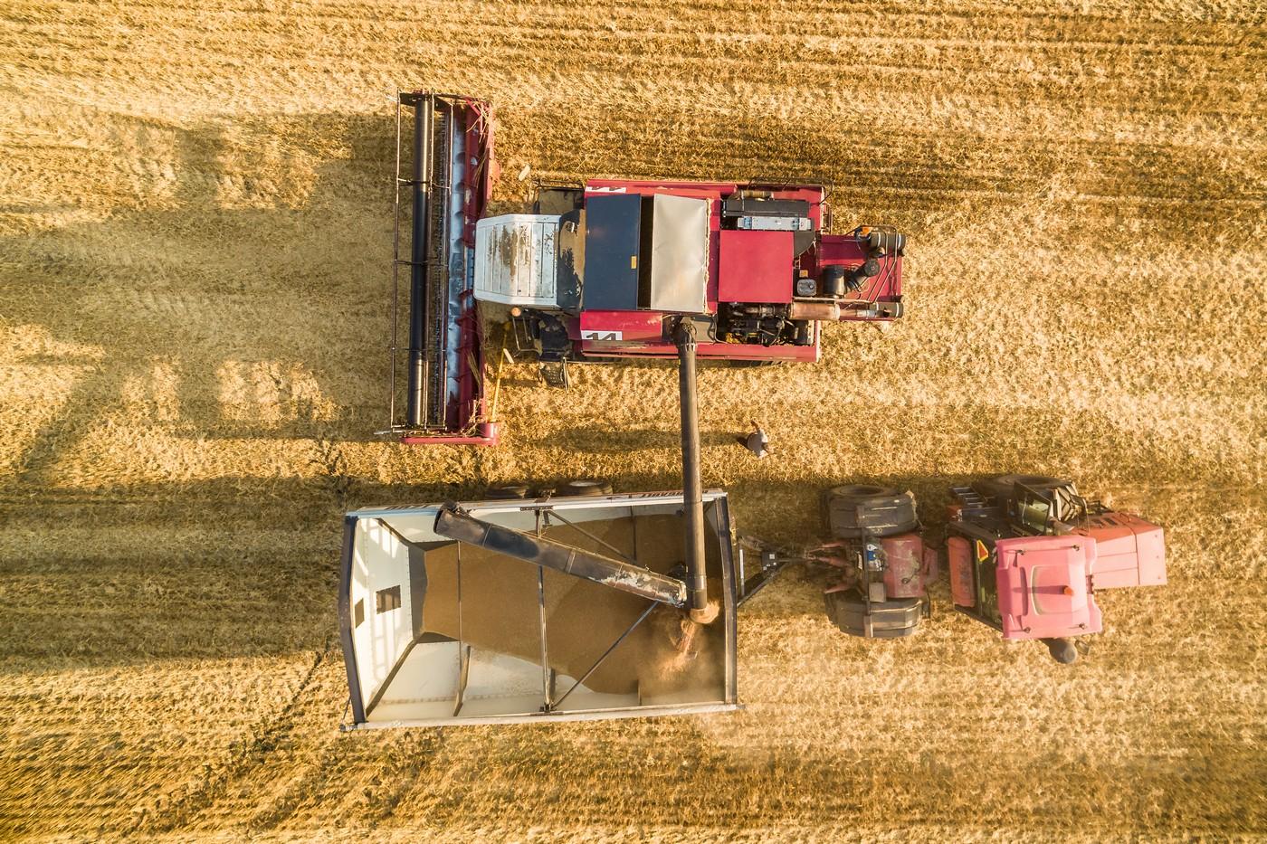 Уборка урожая 2018. фото