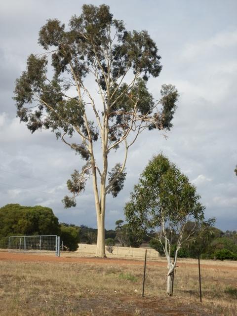 Tree Dec 2012