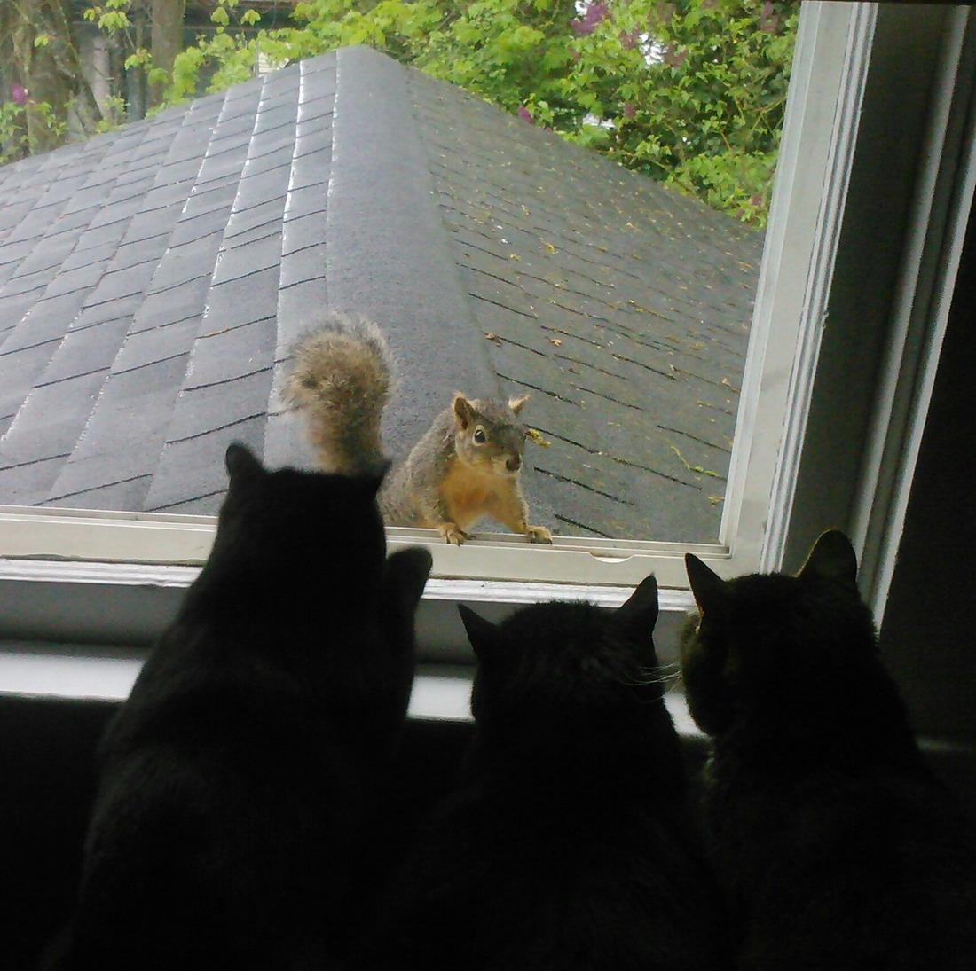 девочка под окнами