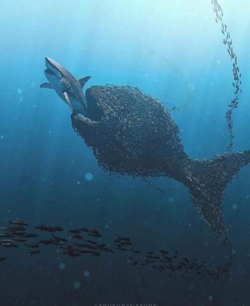 рыбы ересь