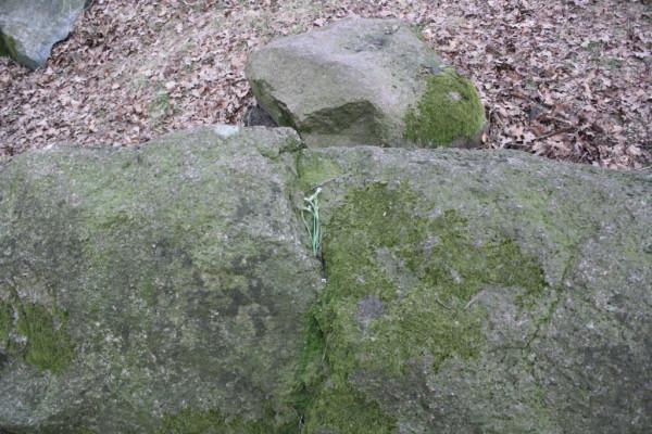 Großsteingrab Hatten 2