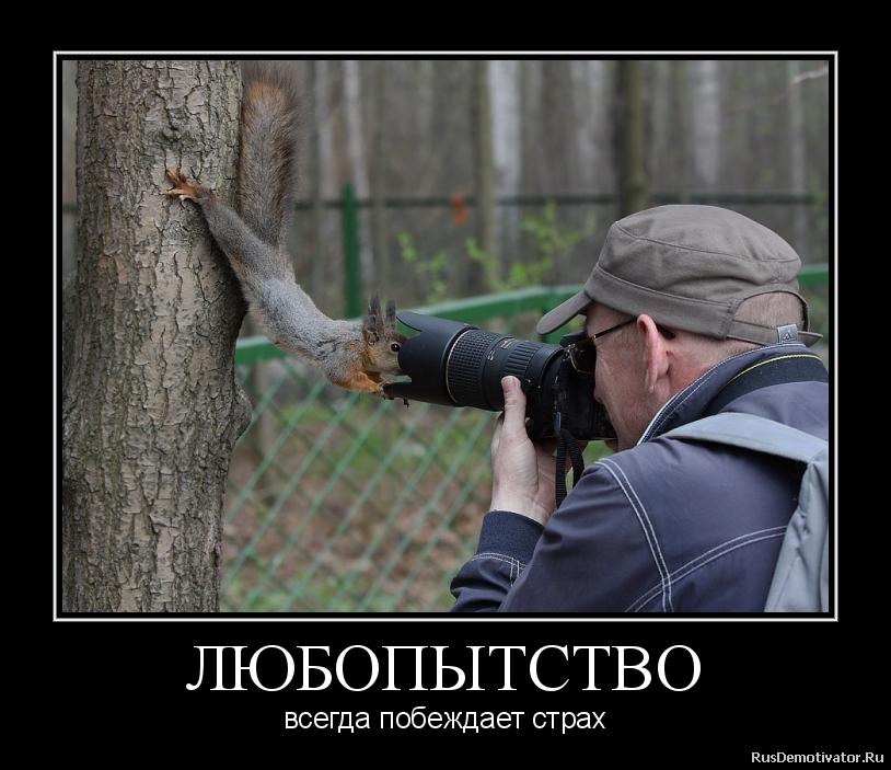 смешные картинки про антона и любопытство пони дружба