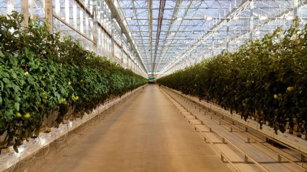 20 гектаров автоматизированных теплиц за 7 месяцев. ОЭЗ Калуга