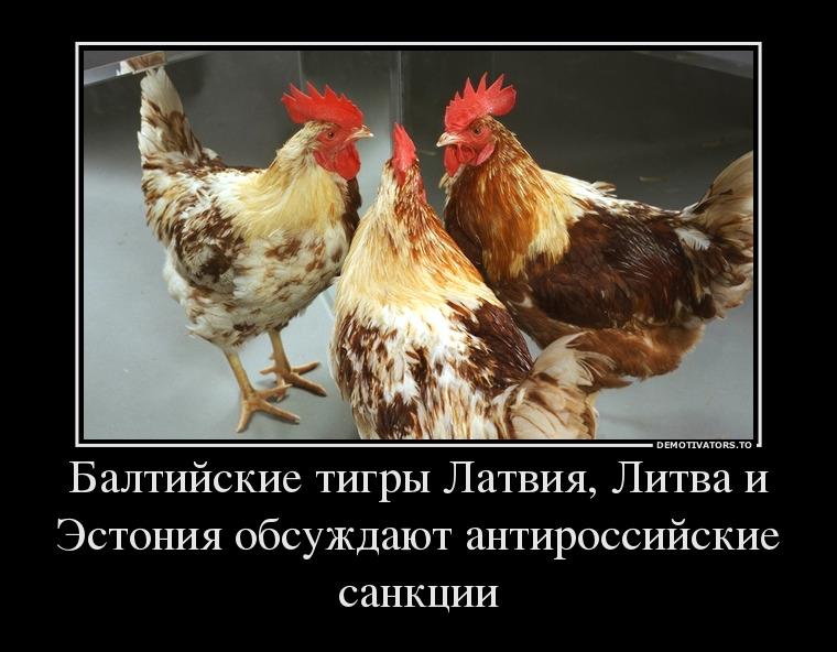 https://ic.pics.livejournal.com/zergulio/14338131/4300483/4300483_original.jpg