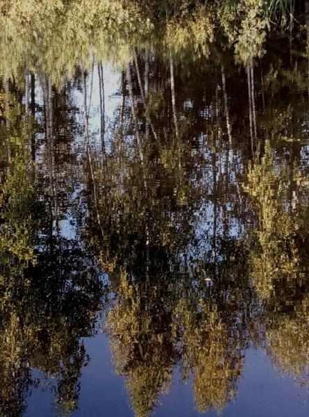 осенний пруд 24.09.17