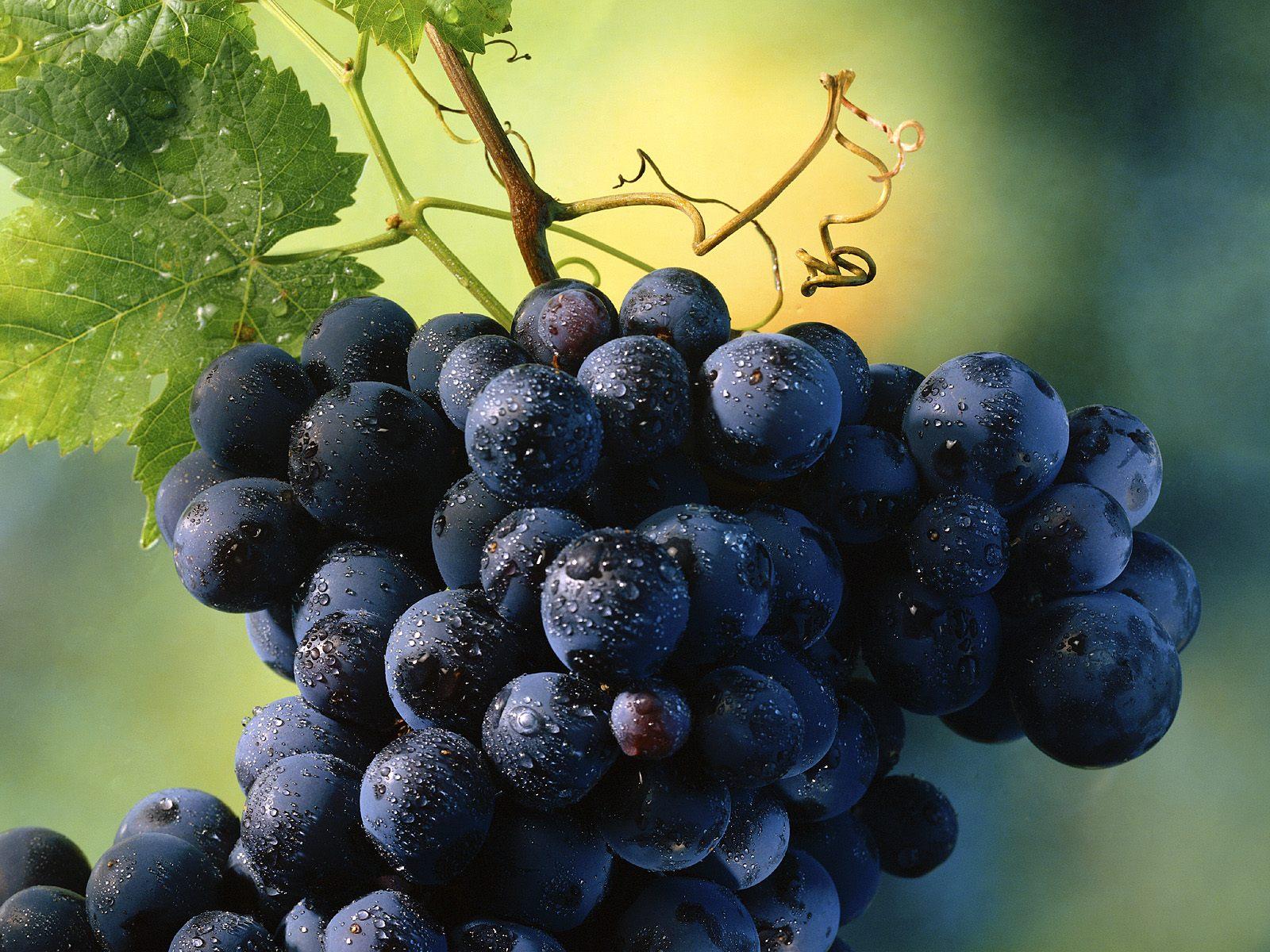 vinograd_na_vetke