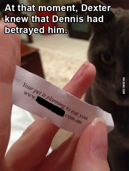 Dextercat