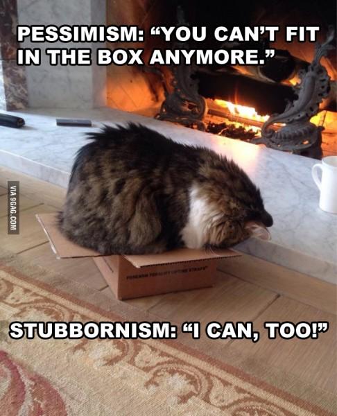 stubbornism