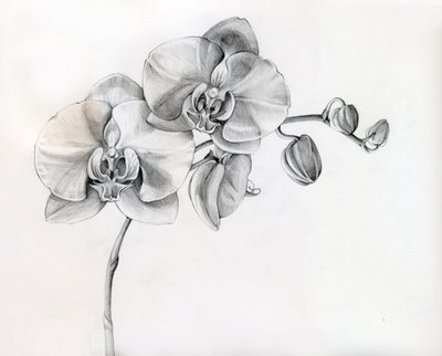 Floral-pencil-drawings-fine-art-blogger